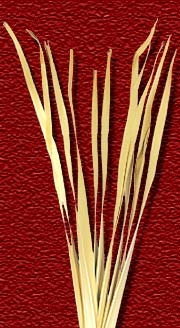 Madhu Flowers is a Manufacturer, Exporter and Supplier of  Dried Leaves Item, Dried Grasses Item from India, Kolkata